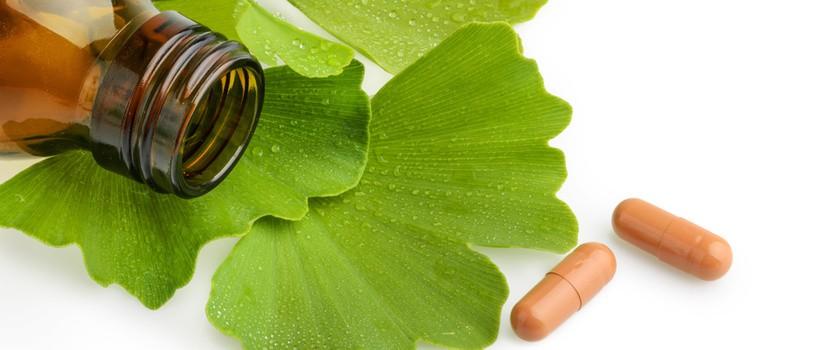 Miłorząb japoński – właściwości i przeciwwskazania do suplementacji Ginkgo biloba