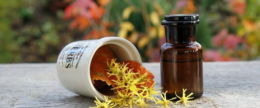 Oczar wirginijski – właściwości i zastosowanie w medycynie oraz w kosmetyce