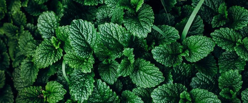 Rośliny lecznicze – 4 zaskakujące fakty