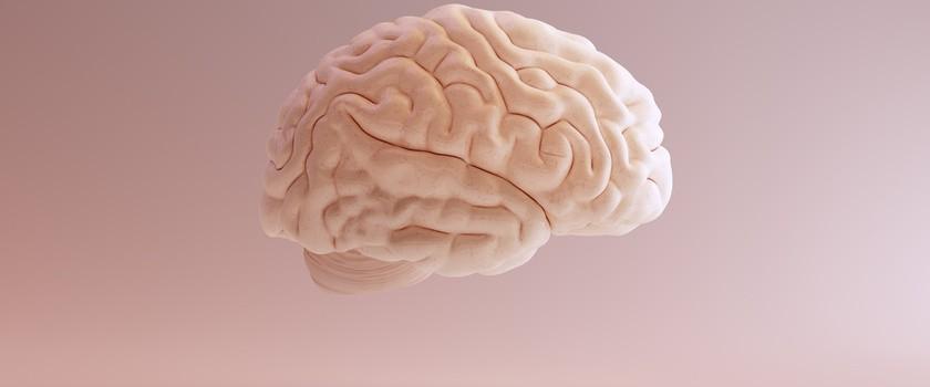 Krążenie mózgowe – jak poprawić słabe krążenie krwi w mózgu?