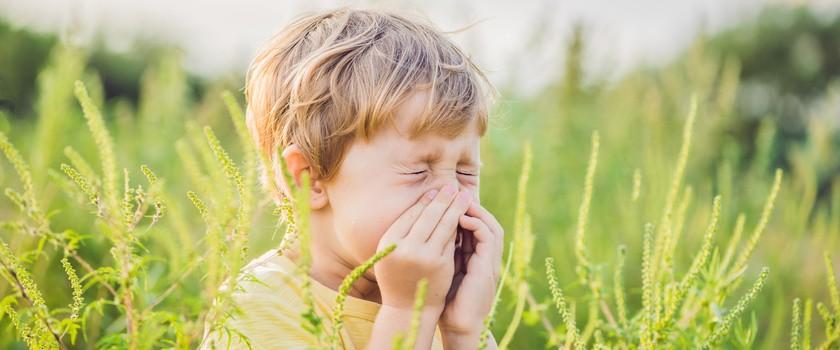 Alergia wziewna – co trzeba o niej wiedzieć?