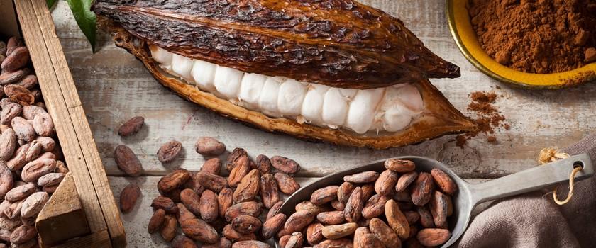 Ziarna kakaowe a otyłość