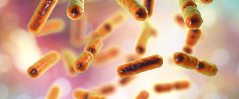 "Bakterie jelitowe ""żywią się"" lekami"