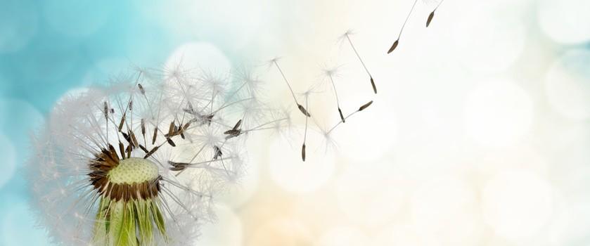 Alergia czy przeziębienie? Jak rozpoznać objawy