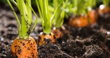 Co kryje się w owocach i warzywach? Chemia i mikrooranizmy w żywności