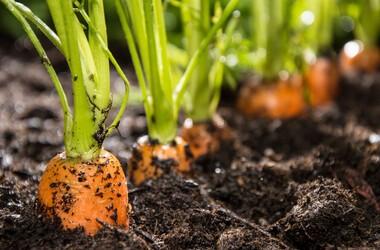 Co kryje się w owocach i warzywach? Chemia i mikroorganizmy w żywności