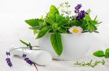 Rośliny lecznicze stosowane w łagodnym przeroście gruczołu krokowego