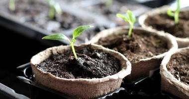 Kiełki – jak hodować je w domowych warunkach?