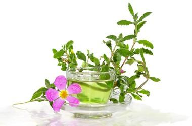 Herbata oczyszczająca – jak wybrać najlepszą?