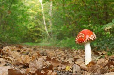 Jak uniknąć zatrucia grzybami?