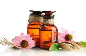Echinacea – działanie, rodzaje i zastosowanie. Wpływ jeżówki na odporność  i zwalczanie przeziębienia