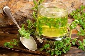 Bacopa monnieri – działanie ekstraktu roślinnego eliksiru życia. Czy suplementowanie bakopy drobnolisej pomaga się szybciej uczyć?