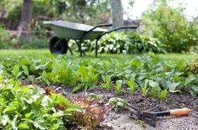 Surowce roślinne stosowane w okresie klimakterium