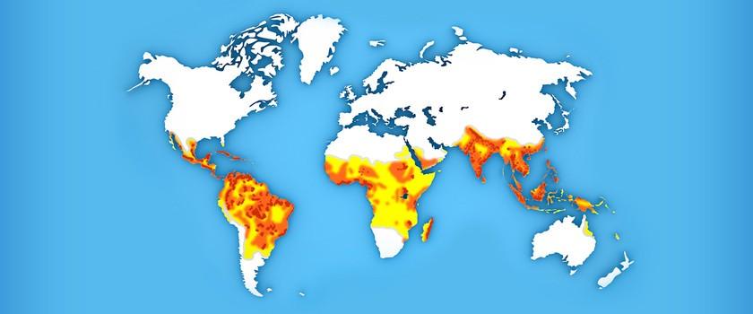 Gorączka Denga — porady dla podróżnych