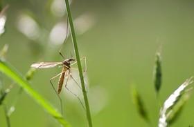 Choroby przenoszone przez komary – rodzaje, leczenie, zapobieganie