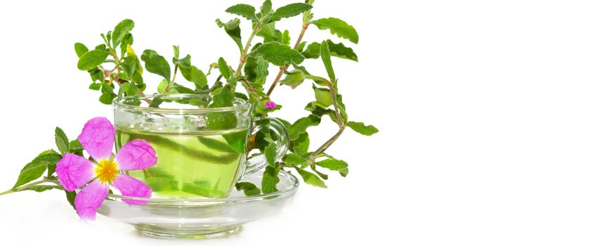 Czystek - właściwości, zastosowanie, herbatka z czystka