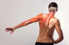 Naukowcy znaleźli sposób na odmłodzenie mięśni! To dobra wiadomość dla seniorów i zawodowych sportowców