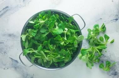 Roszponka – wartości odżywcze, witaminy i właściwości. Zastosowanie roszpunki warzywnej w kuchni