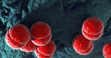 Meningokoki – czym są i jak się przed nimi chronić? Objawy i leczenie choroby meningokokowej