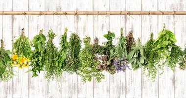 Pokrzywa, skrzyp polny i nagietek lekarski nie tylko jako składnik herbatek ziołowych