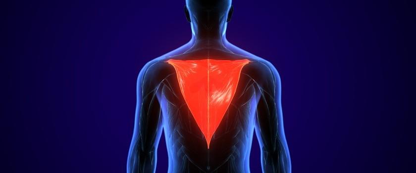 Mięsień czworoboczny (trapezius) – gdzie się znajduje i jakie funkcje pełni mięsień czworoboczny grzbietu? Przyczyny i ćwiczenia na ból mięśnia kapturowego