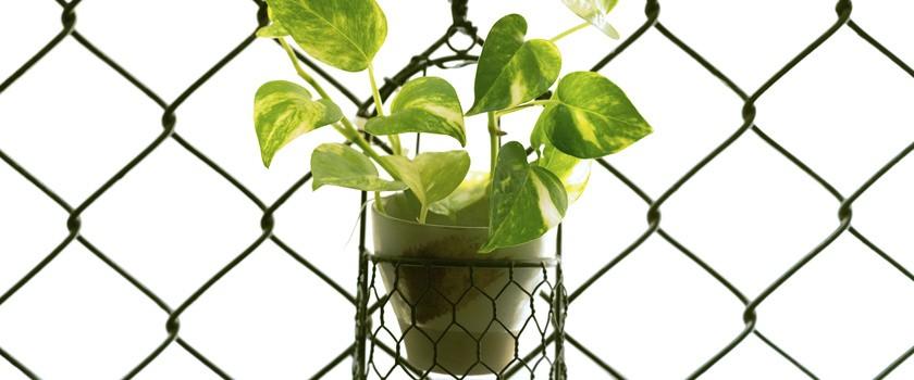 Popularna roślina może oczyszczać powietrze w domu