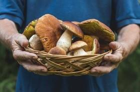 Grzyby – właściwości i wartości odżywcze. Jak je przyrządzać, suszyć i mrozić? Jak uniknąć zatrucia grzybami?