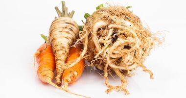 Nie tylko do zupy – marchew i pietruszka w kosmetyce i lecznictwie