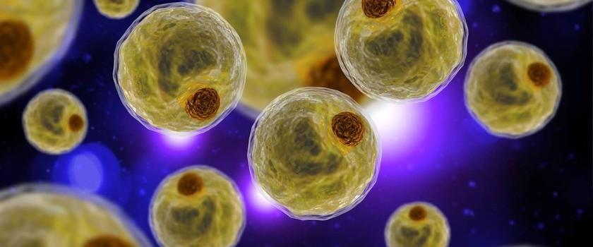 Adipocyty (komórki tkanki tłuszczowej) – czym są i jak działają? Jaki jest ich związek z tyciem?