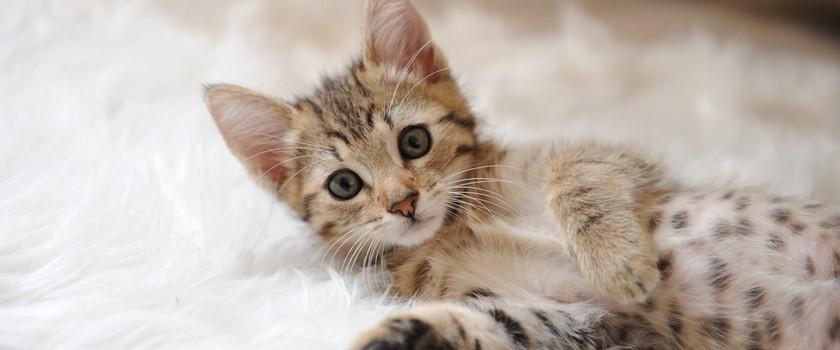 Choroba kociego pazura - objawy i leczenie