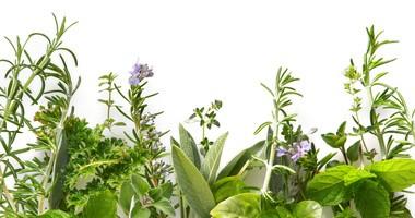 Kuracje ziołowe — czy zawsze są bezpieczne?