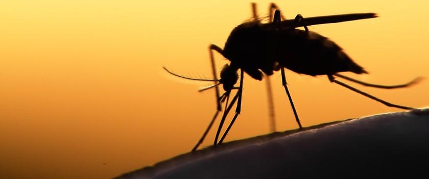 Afrykański wirus atakuje w Rzymie