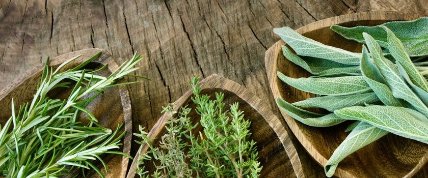 Roślinna terapia zatruć pokarmowych