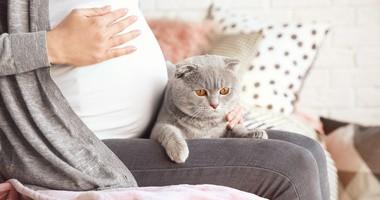 Toksoplazmoza w ciąży – czym grozi, jak ją leczyć, jak jej uniknąć?