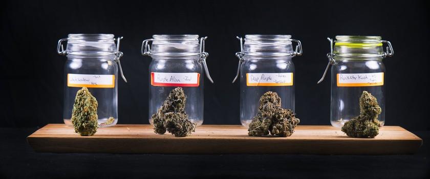 Od stycznia w aptekach kupimy medyczną marihuanę