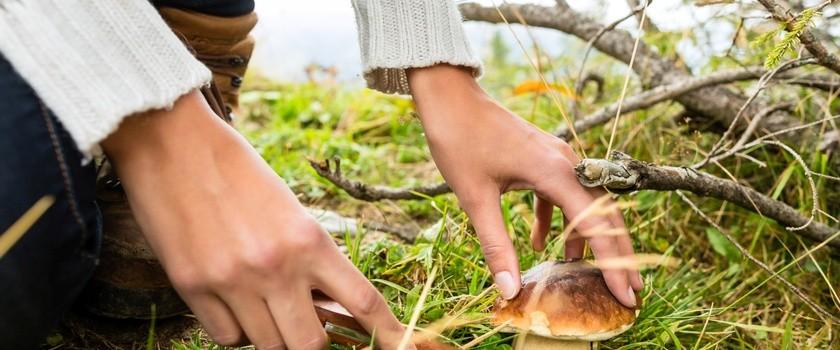Przegląd grzybów: jak zbierać je bezpiecznie?