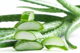Aloes – źródło urody i zdrowia