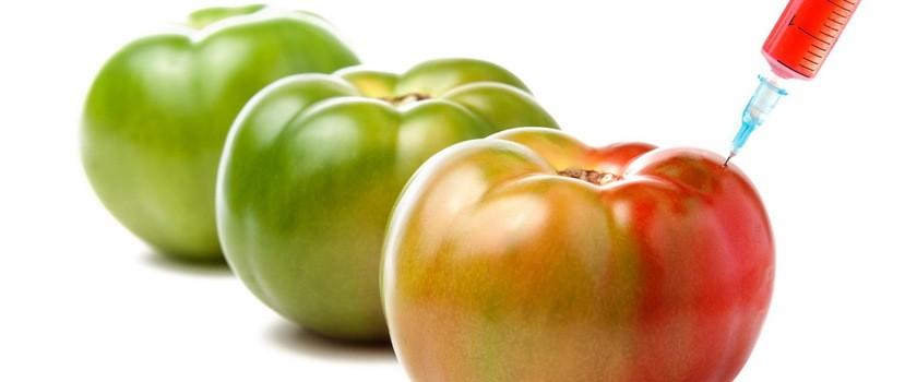GMO – czy jest się czego obawiać?