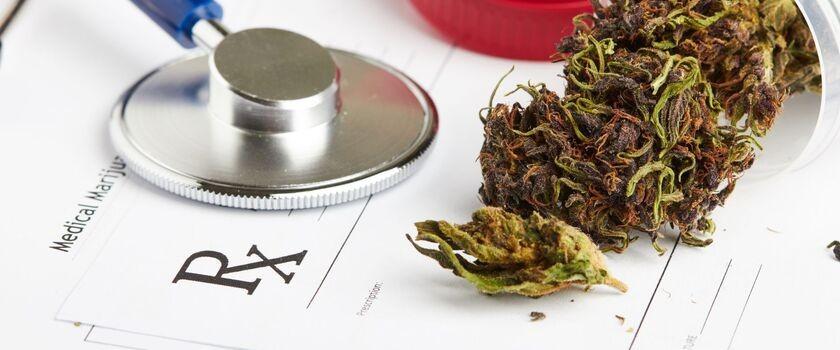 Ewa Kopacz chce wprowadzić do obrotu leki z medyczną marihuaną
