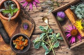 Terapia ziołowa w stanach zapalnych dróg moczowych