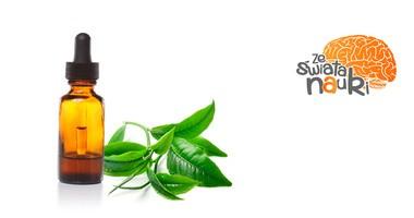 Olejek z drzewa herbacianego vs nużeniec. Co na to badania?