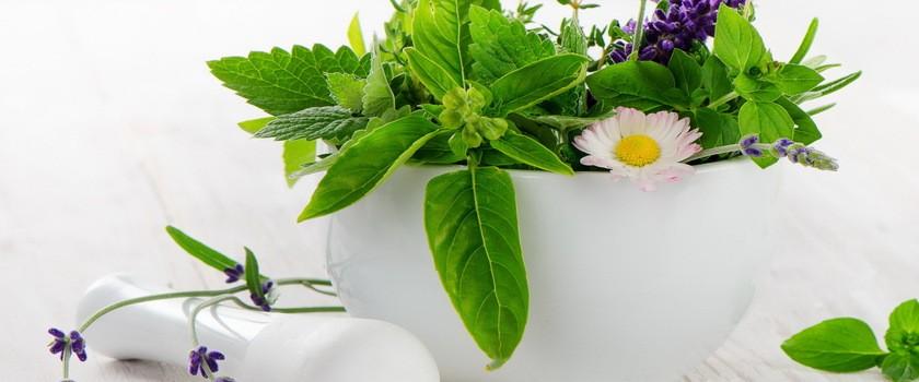 Rośliny i zioła na przeziębienie