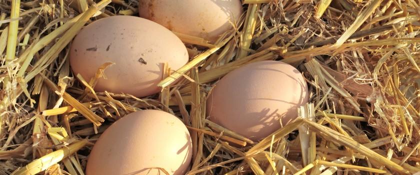 W Polsce rośnie zagrożenie salmonellą