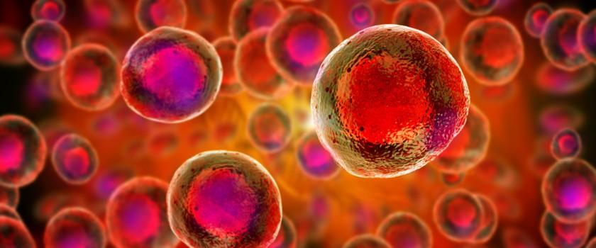 Komórki macierzyste – czym są i jak możemy je wykorzystać?