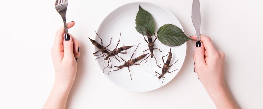 Jedzenie owadów może poprawiać mikroflorę jelitową