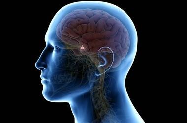 Rezonans magnetyczny przysadki mózgowej – przebieg badania. Jakie są skutki uboczne MRI przysadki z kontrastem?