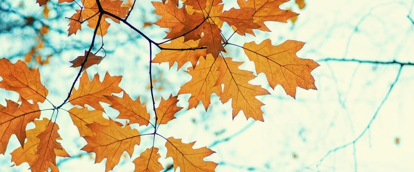 Naturalne sposoby na odporność jesienią