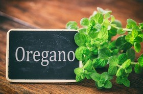 Oregano – wartości odżywcze, właściwości i zastosowanie lebiodki pospolitej