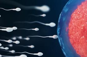 Zmiana diety w bardzo krótkim czasie może wpłynąć na jakość spermy
