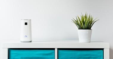 Popraw jakość powietrza w domu. O roślinach antysmogowych i oczyszczaczach powietrza
